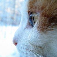 Мир глазами кошки :: Виктория Титова