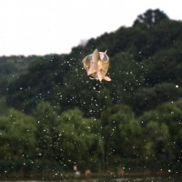 рыбы тоже летают ) :: Tatiana Florinzza