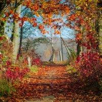 Осень :: Паша Войчишин