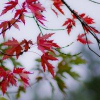 Осень в японском стиле :: Александр Крупский