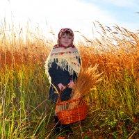 осень.поле.русское поле....Ксения. :: АИДа АИДа