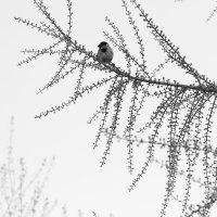 Холодная весна :: Елена Васильева