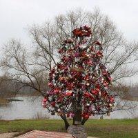 дерево :: ВИТ АЛИЙ