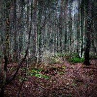 Лес :: Вика Курилова