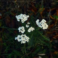 осенний цветок :: Сергей Леонтьев