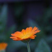 цветок :: Lyba Schlepova