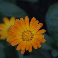 цветы :: Lyba Schlepova