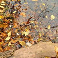 Осеннее озеро :: Оксана Баллыева