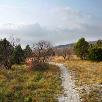 Можжевеловый лес не тронет осень. :: Татьяна Гордеева