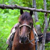 будни лошади. :: Лариса Красноперова