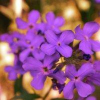 Цветы)) :: LedyLizka Степанова