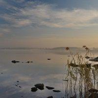 осенний туман :: Dmitry Ozersky