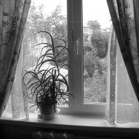 Окно :: Olga Taube