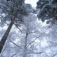 зимний лес :: юрий толоконников