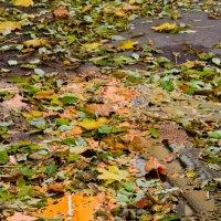 опавшая листва :: Roman Demidov