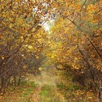 Осенний лес :: Kate Knyazeva