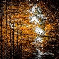 Осень :: Элла Мережская