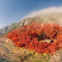 Осень раскрасила скумпией губы... :: viton