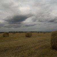 Осеннее поле :: Sem sem