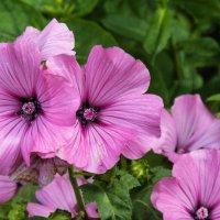 цветы :: Владимир Кроливец