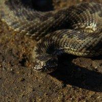 змей :: lev
