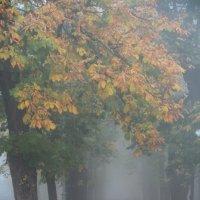 Туманное утро Ставрополя :: Александр Царегородцев