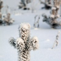 Холодно. :: nakip1