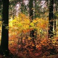 Солнце сквозь осень :: Юрий