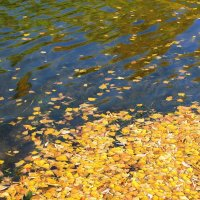 Листья на воде :: Владимир Ляпунов