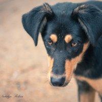 Пёс :: Nataliya Belova