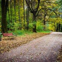 Тихие аллеи парка :: Анжелика Литвинова