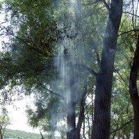 дух леса :: Алина Гилёва