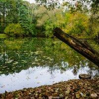 Осенний пруд :: Анжелика Литвинова