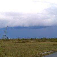 надвигается буря :: Алина Гилёва