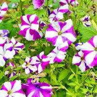 Цветы :: Сергей Гатилов