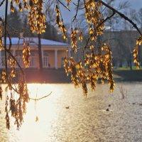 Золотыми монистами - листьями осень звенела... :: Ирэна Мазакина