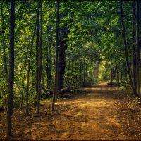 Тишина леса :: Алексей Соминский