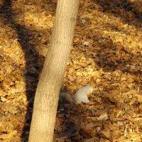 Осень. Белка :: Olga Kot