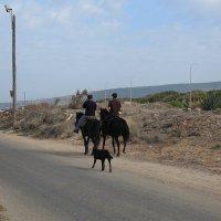 две лошадиные силы :: evgeni vaizer