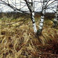 ...очень осенняя осень!...:))) :: Ира Егорова :)))