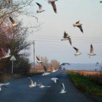 чайки :: Игорь Попов