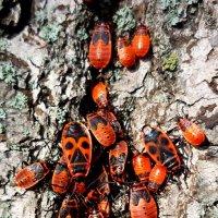 Тусовка в бабочках... :: Андрей Самуйлов