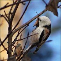 Птичка :: Андрей Дворников