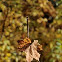 Осенний минимализм :: Павел Евстратов