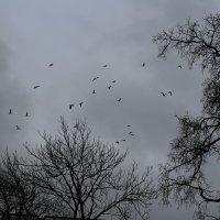 Кроны.Птицы.Небо. :: Елена Разумилова