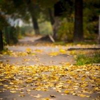 Осень в моем дворике.... :: Ольга Деледивка