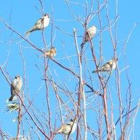 птичье совещание :: НАДЕЖДА КУЖЕЛЕВА