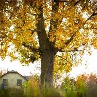 Осень люблю... :: Ольга Деледивка