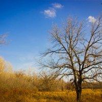 Одинокое дерево. :: Анастасия Никитина