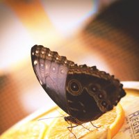 Выставка бабочек :: Александр Тихомиров